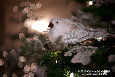 Peace On Earth ©  2010 Colleen M. Griffith. All Rights Reserved.  This material may not be published, broadcast, modified, or redistributed in any way without written agreement with the creator.  This image is registered with the US Copyright Office. www.colleenmgriffith.com www.facebook.com/colleen.griffith   Click here to see a version of this photo with the green fiber on the bird's wings (near the tail) removed.