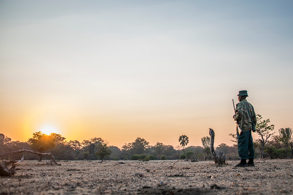 Morning Patrol - Liwonde National Park, Malawi