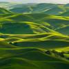 Gentle Greens