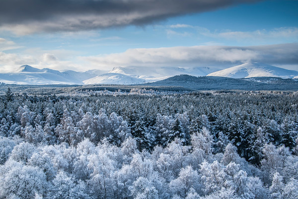 Snowy Dawn - Cairngorms National Park, Scotland