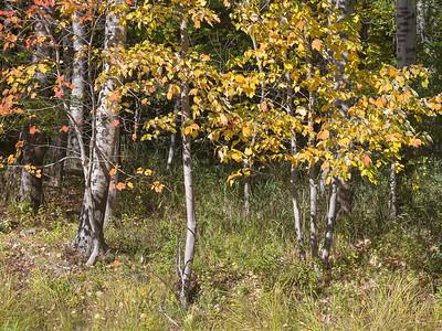Wood's Edge,Acadia