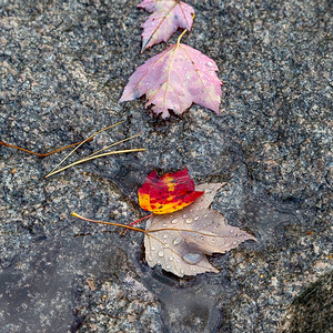 Falls Leaves on Granite
