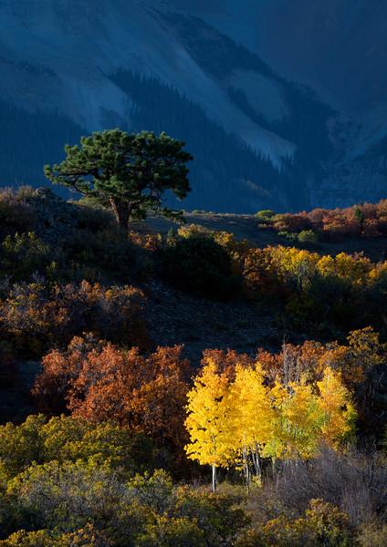 """Tree at the Divide"""
