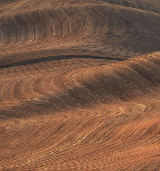 """The Palouse Wave"""