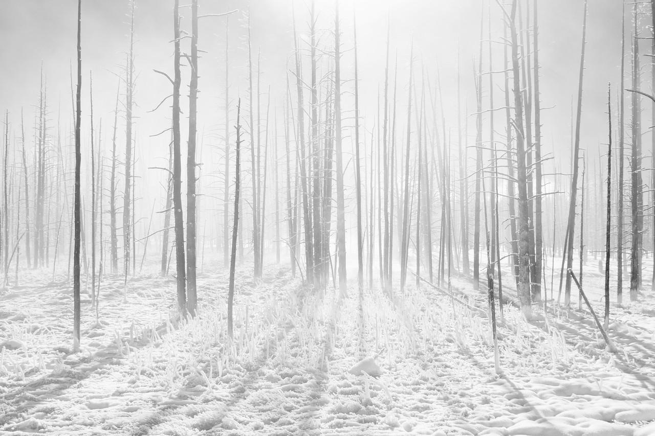 """""""Fog"""""""