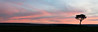 """Mara Sunrise Panorama"""