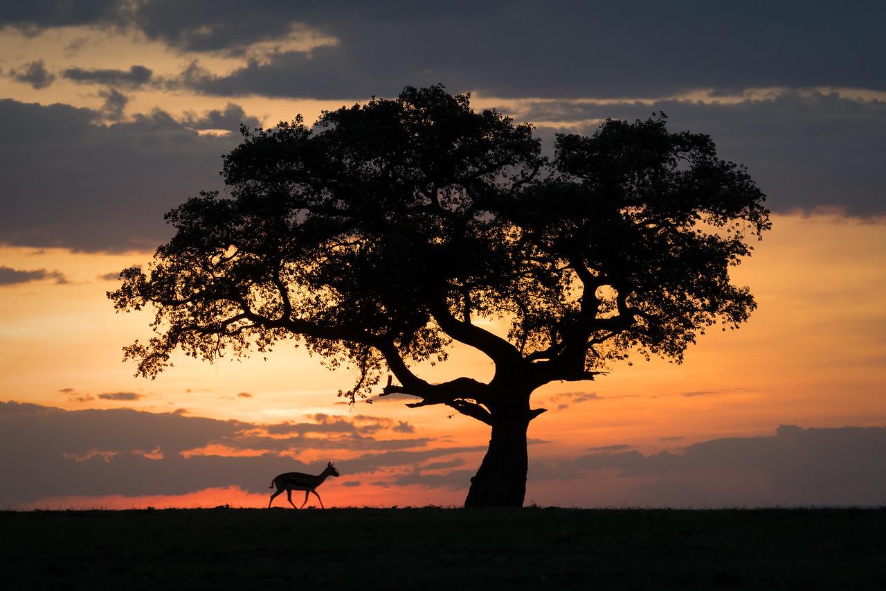 """""""Gazelle at Sunset"""""""