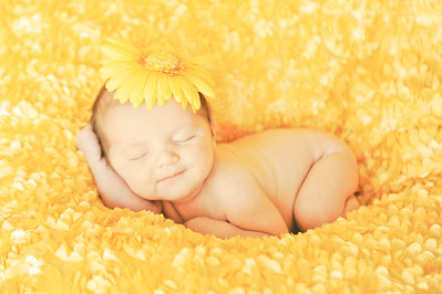Yellow sunflower baby