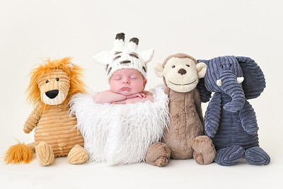 Stuffed Animal Newborn Photo