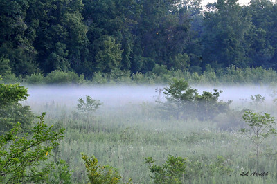 Fog on this early summer morning