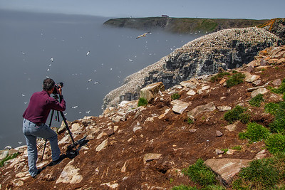 Photographer Cape St Mary's Bird Sanctuary