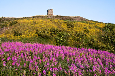 Wildflowers at Cabot Tower