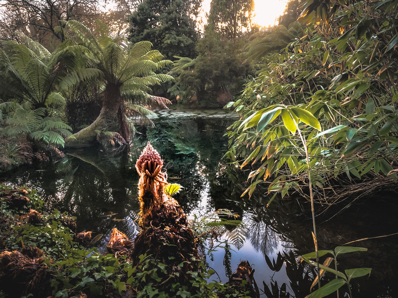 No, this is not the Amazon jungle.. this is Penjerrick Garden, mid January! Cornwall 2018