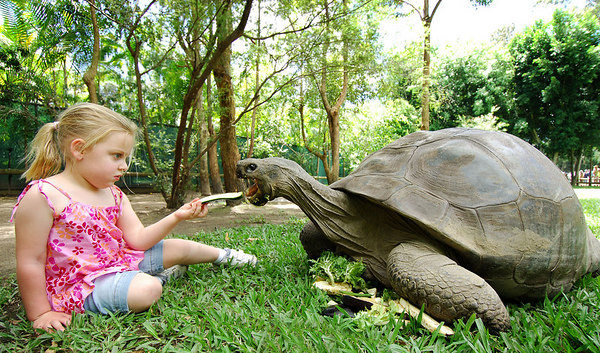 11 NOV 2005 SUNSHINE COAST, QLD, AUSTRALIA - Harriett the Galapagos tortoise celebrates her 175th birthday with 3 year old Samantha Clancy.  She is the worlds oldest living animal and resides at Steve Irwin's Australia Zoo in Queensland, Australia - PHOTO: CAMERON LAIRD (Ph: +61 418238811)