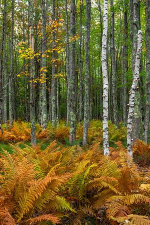 Fall in Cinnamon