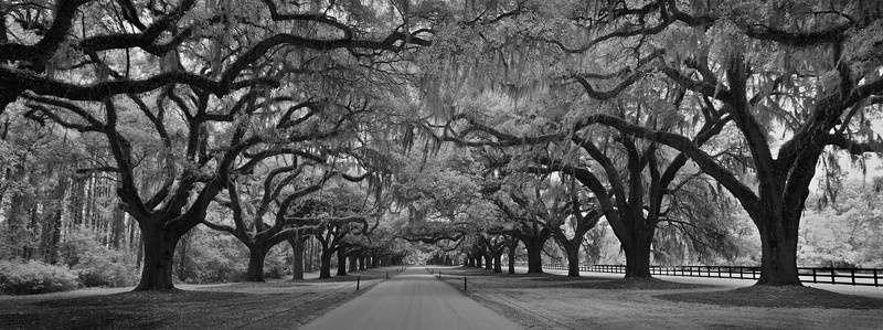 Oak Tree Avenue