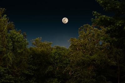 Full Moon Rising in Montgomery