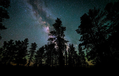 Milky Way with Airglow Tree silhouettes