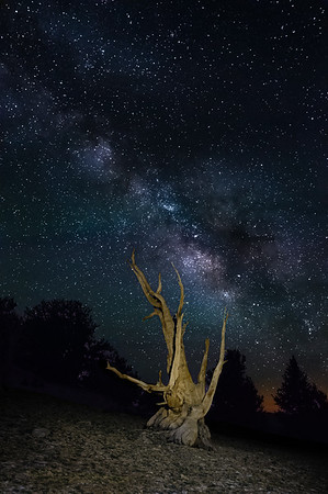 Ancient Bristlecone, Airglow, and Milky Way