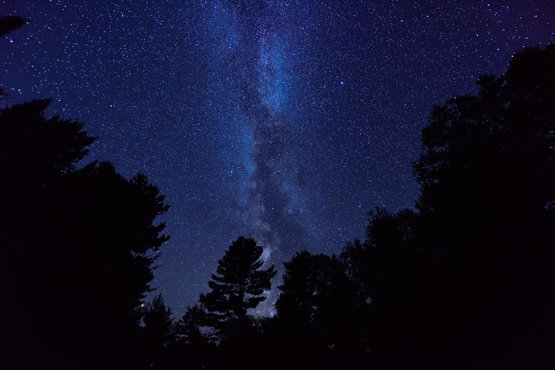 Milky Way among the Pines 01