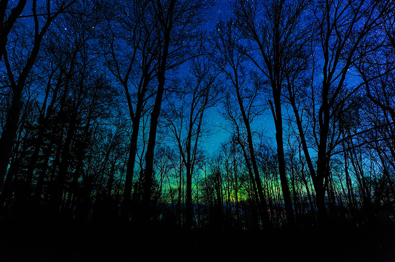 Aurora through the trees at Union Bay 01