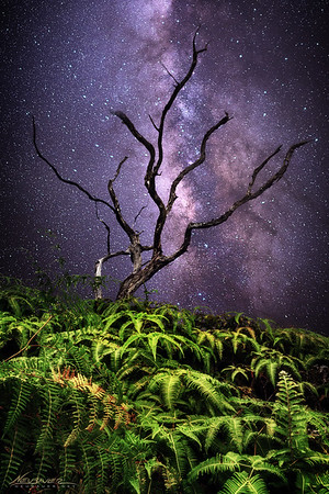 I wander a lot, or I did before I had a son and became too tired to stay up past 7:00pm. One night back in 2012 I was exploring a trail on Maui, Hawaii far above the sleepy town of Wailuku on a ridge lit by stars. I stopped to take a few pictures, this being one of them.