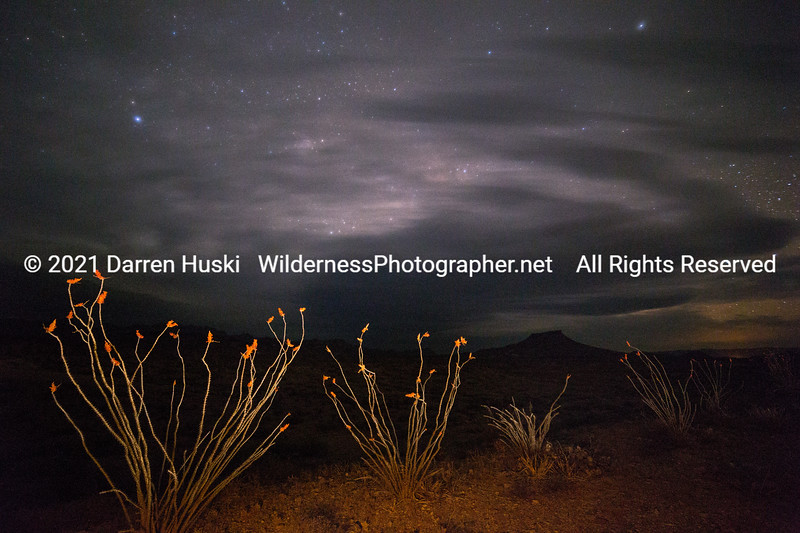 Ocotillo by Night