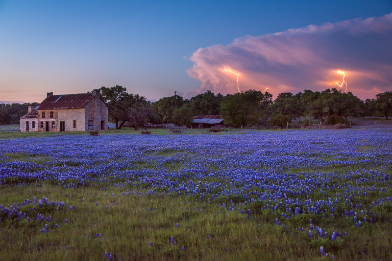 Bluebonnets and Lightning #1