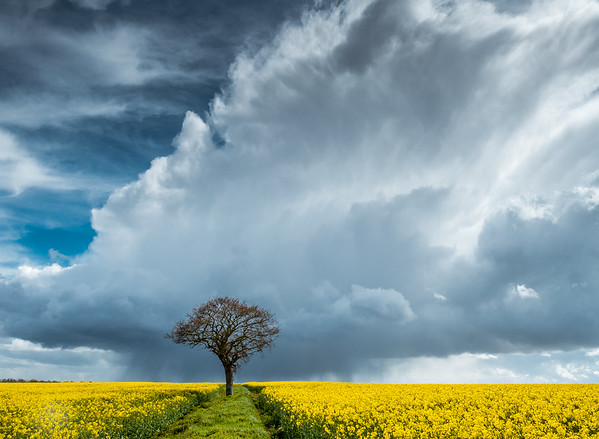 Storm over Oilseed Rape