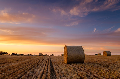 Bales at Sunset