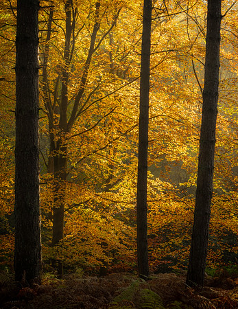Beech Light