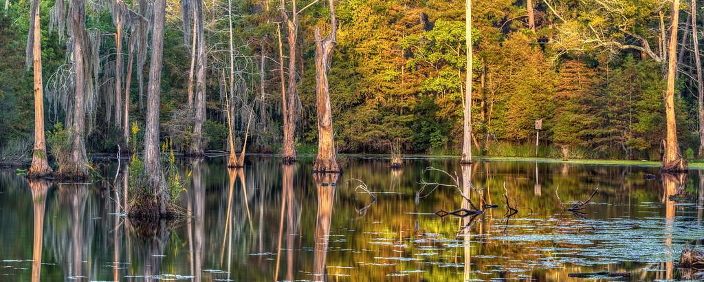 Swamp Sunrise Panorama