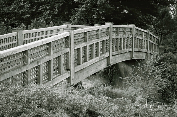 A bridge in the QEII park gardens in Vancouver