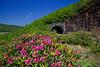 Pinnacle Tunnel