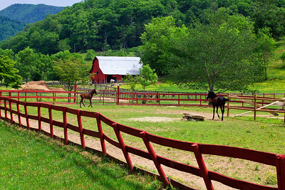 Horse Farm with Barn