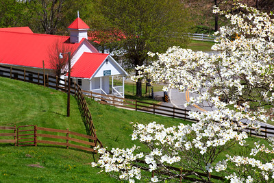 Dogwood blooms and a country mountain church in the springtime