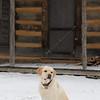 Riley in Snow