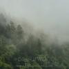 Sun Peeking Through The Mist, Waterrock Knob, Blue Ridge Parkway, North Carolina