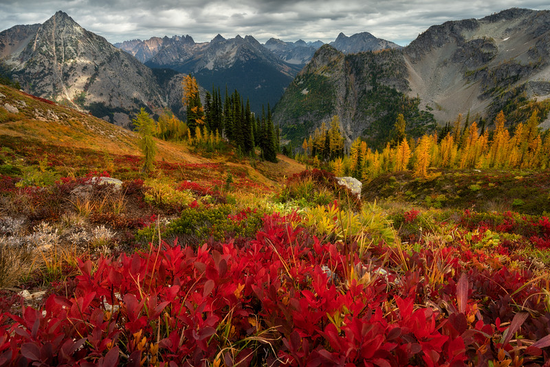 Lustrous Northern Autumn Meadows