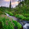 Stream just below Whatcom Pass, North Cascades National Park