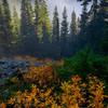 North Cascades Foggy Morning