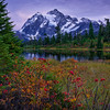 Picture Lake Mountain Ash Purple Mountain Majesty