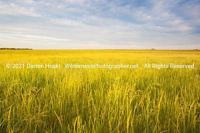 Open range grasslands on the edge of Tarrant County