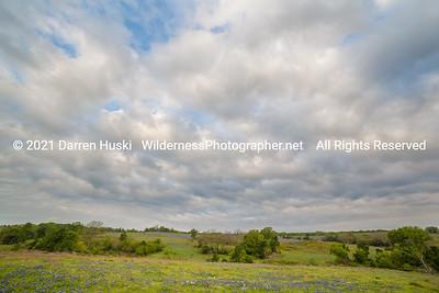 Wildflowers and Big Sky