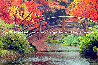 The Moon Bridge in the Fort Worth Japanese Garden