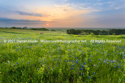 Bluebonnet field Sunrise
