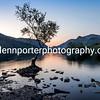 The lone tree, Llyn Padarn, Snowdonia, North Wales.