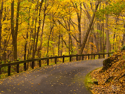 Autumn Road to Mount Holyoke