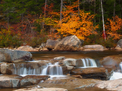 Autumn Silk