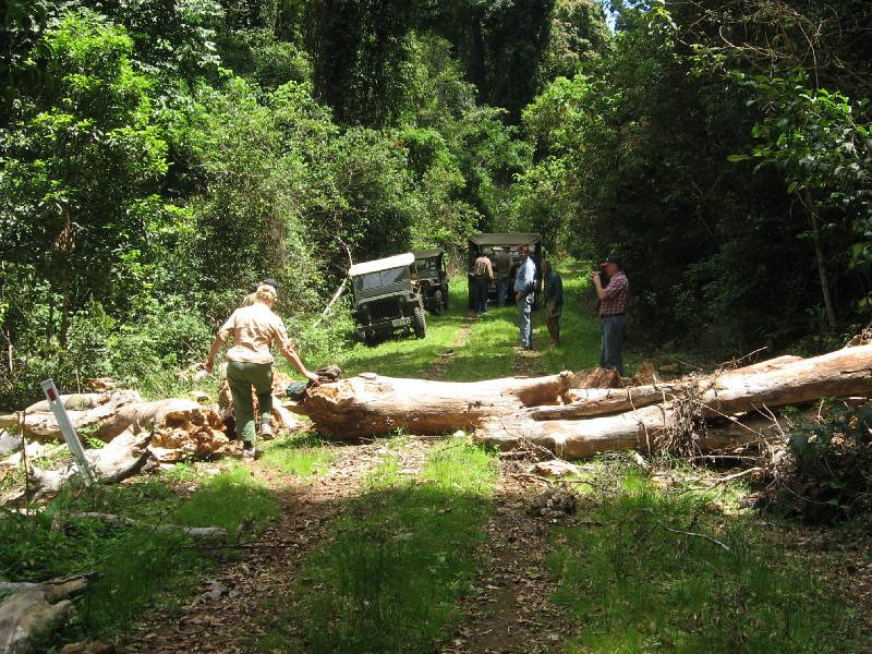 Large tree that had fallen across the track